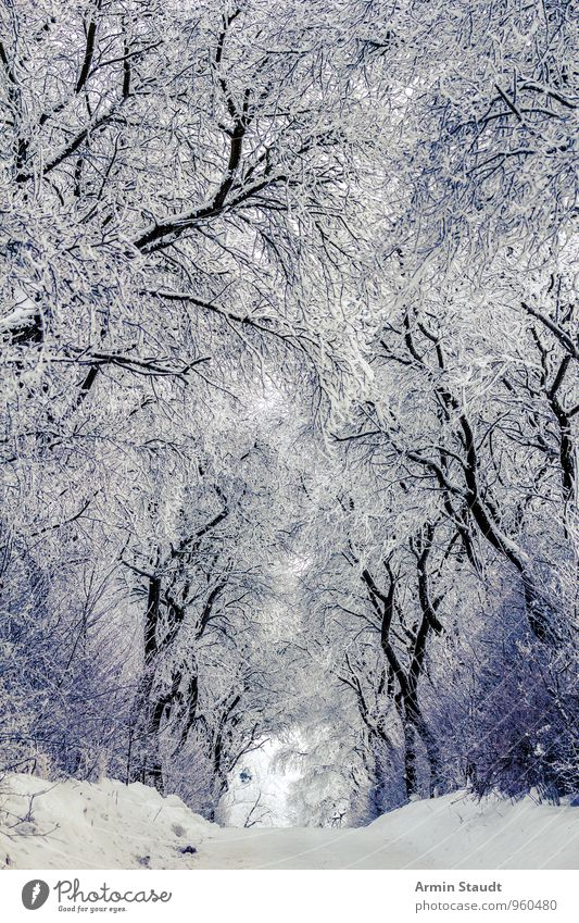 Winter - Snow - Trees - Way Calm Winter vacation Nature Climate Weather Beautiful weather Bushes Forest Freeze Esthetic Fresh Cold White Moody Protection