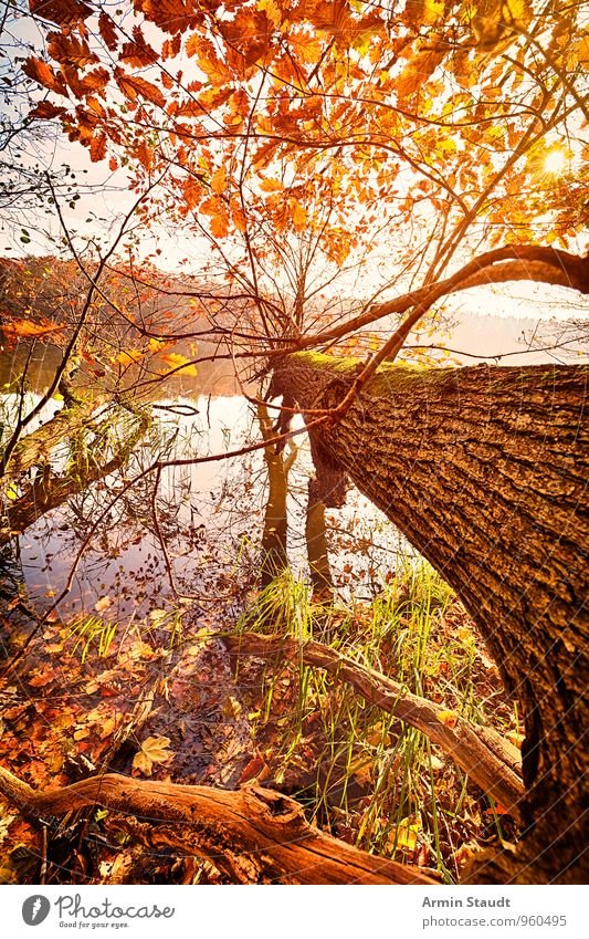 Sky Nature Vacation & Travel Beautiful Colour Water Sun Tree Relaxation Landscape Calm Forest Environment Yellow Autumn Lake