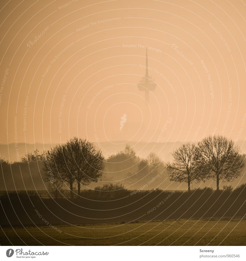 in the fog Environment Landscape Autumn Fog Tree Park Meadow Field Cologne Town Outskirts Landmark Colonius - television tower Tall Point Colour photo