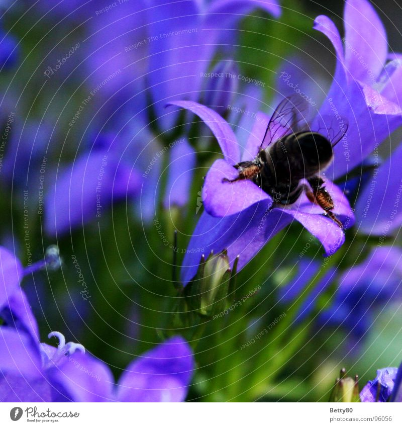 round Bee Sprinkle Insect Plant Flower Stamen Honey pollination Nature Garden Nectar