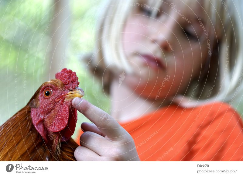 Fritz, the rooster Food Egg Poultry Nutrition Parenting School Agriculture Forestry Child Girl 1 Human being 8 - 13 years Infancy Animal Pet Farm animal Bird