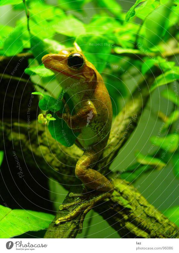 Nature Green Plant Animal Colour Leaf Black Eyes Spring Stone Jump Brown Orange Rain Gold Skin