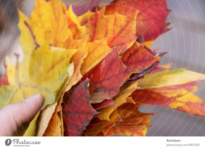 A handful of autumn Lifestyle Joy Healthy Well-being Environment Nature Animal Autumn Tree Leaf Garden Forest Bouquet Change Autumn leaves Autumnal
