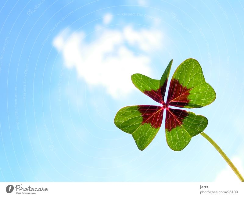 Sky Green Blue Joy Clouds Happy Contentment Hope Trust Desire Find Clover Congratulations Flower Good luck charm Popular belief