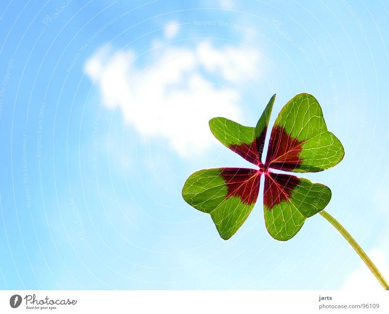 Sky Green Blue Joy Clouds Happy Contentment Hope Trust Desire Find Clover Congratulations Flower Good luck charm Popular belief