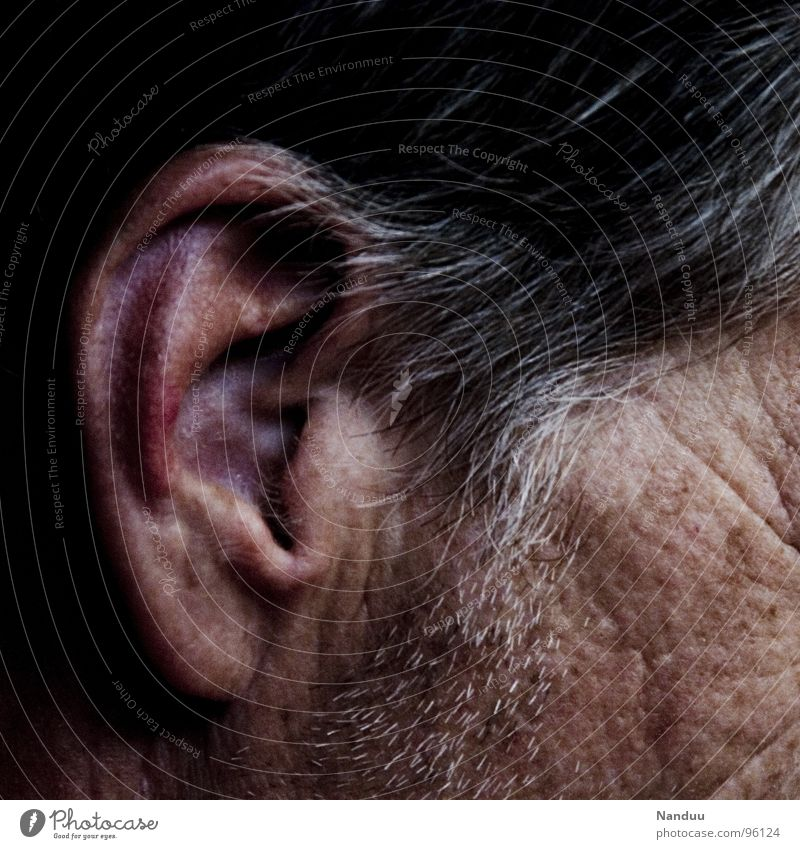 red ear Hair and hairstyles Skin Senses Human being Man Adults Senior citizen Ear Gray-haired Listening Near Red Grayed Stringer Vessel Vulnerable Sensitive