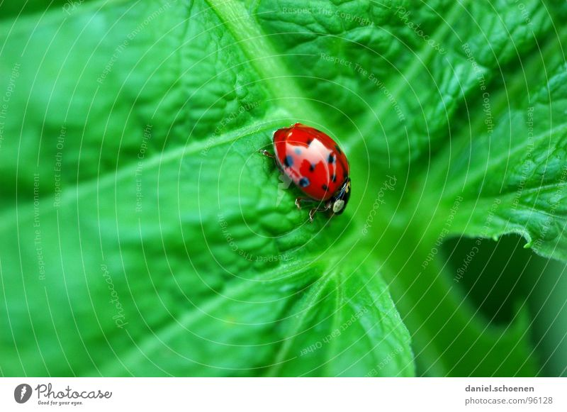 Green Red Summer Colour Happy Ladybird Crawl Slowly