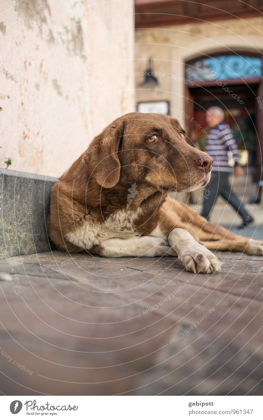 dog's life Luxury Antalya Old town Animal Pet Dog 1 Lie Sadness Concern Fatigue Appetite Homesickness Loneliness Exhaustion Homeless Street Colour photo