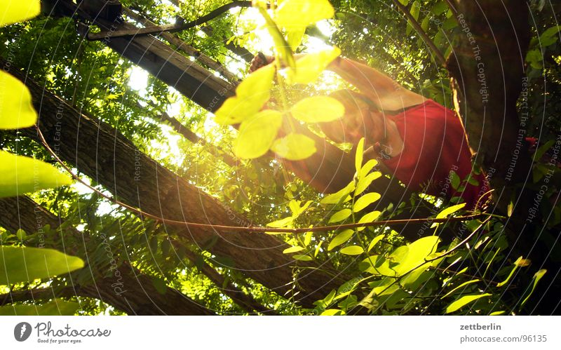 Woman Tree Red Sun Summer Vacation & Travel Leaf Forest Dangerous Threat Climbing Tree trunk Upward Short vacation Leaf canopy