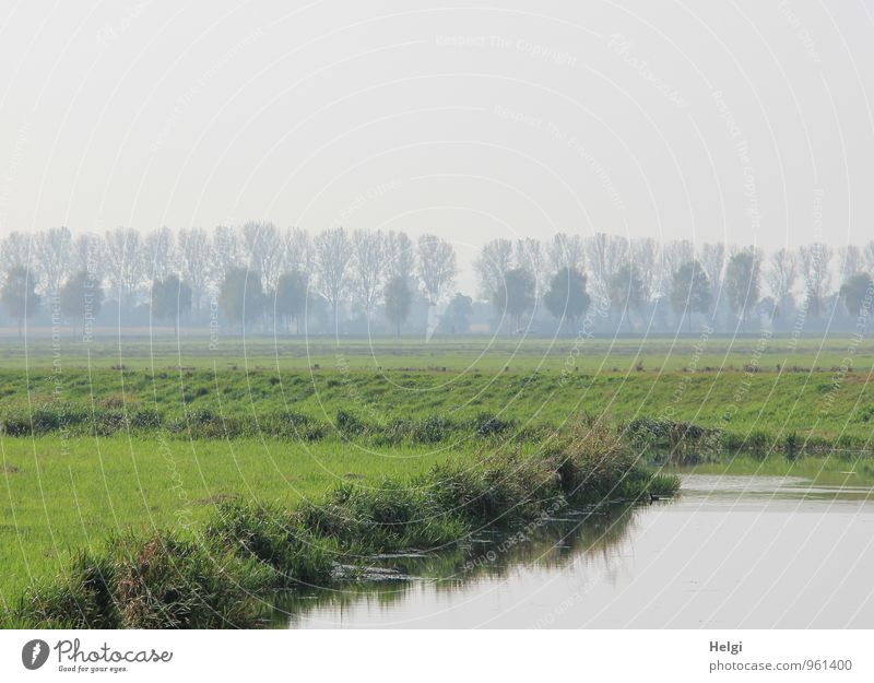 Residual fog at the river... Environment Nature Landscape Plant Water Sky Autumn Fog Tree Grass Foliage plant Wild plant River bank Stand Growth Authentic