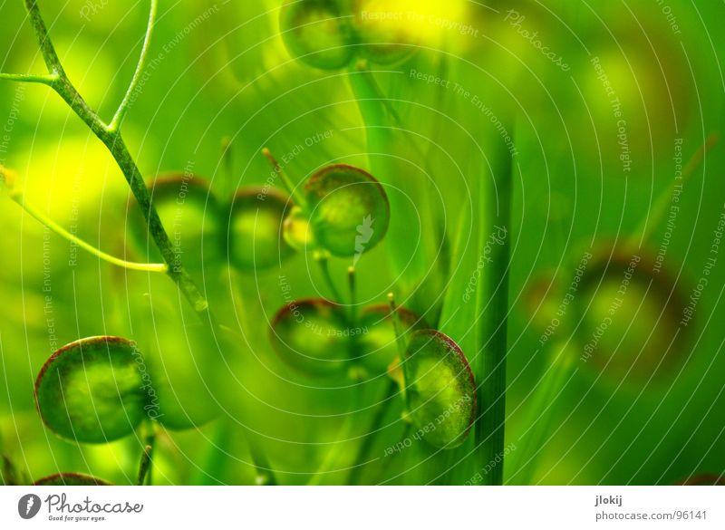 Nature Green Plant Flower Yellow Meadow Small Blossom Round Stalk Window pane Seed Flat Propagation No idea
