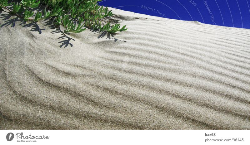 Green Blue Plant Summer Beach Vacation & Travel Calm Loneliness Yellow Life Above Warmth Sand Line Brown Background picture