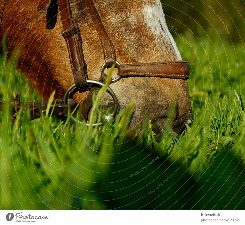 delicious evening bread Horse Dinner Snout Feed Nutrition To feed Grass Switzerland Evening sun Delicious Fine Mammal Equestrian sports Mountain Mouth Nose