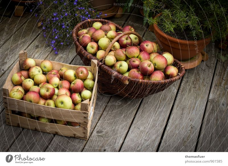 apples Fruit Apple Organic produce Vegetarian diet Diet Garden To enjoy Sustainability Basket Juicy Crate Exterior shot Detail Day Light Shadow Contrast