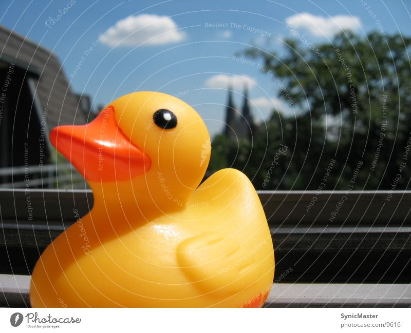 Duck At Window Summer Yellow Things Sun