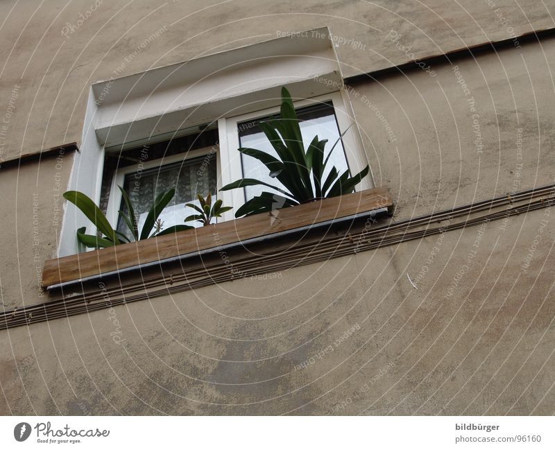 Window on tip Flower Window box Concrete Gloomy Wall (barrier) House (Residential Structure) Gray Tenancy law Laws and Regulations