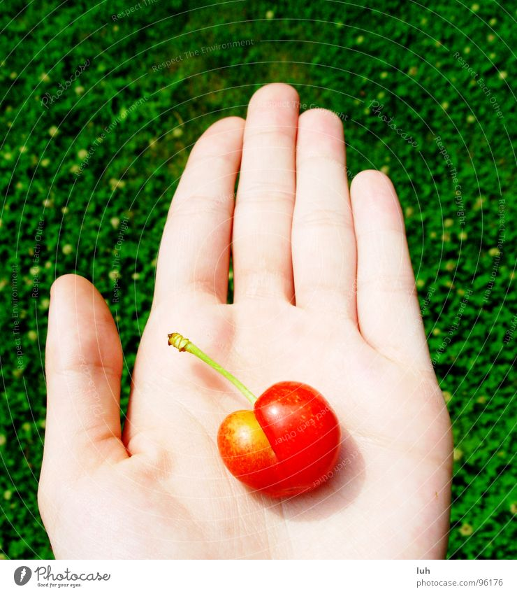 May I introduce? Cherrylady. Green Meadow Grass Hand Palm of the hand Red Yellow Delicious Summer Fruit Lawn look here you are Skin