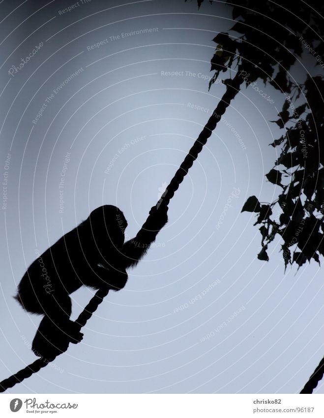 Sky Tree Warmth Rope Africa Climbing Hot Zoo Mammal Monkeys Absurdity Sunday Romp Apes Chimpanzee Liana