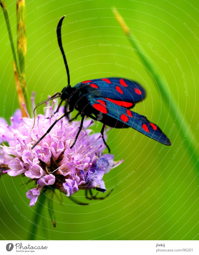 Nature Flower Green Plant Red Calm Black Animal Life Meadow Blossom Grass Spring Legs Pink Wind
