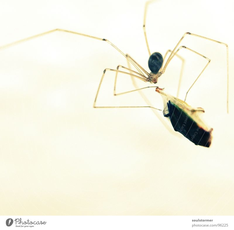 Animal Legs Fear Dangerous Threat Insect Catch Captured Lunch 8 Disgust Spider Spider's web Feed Bug Net
