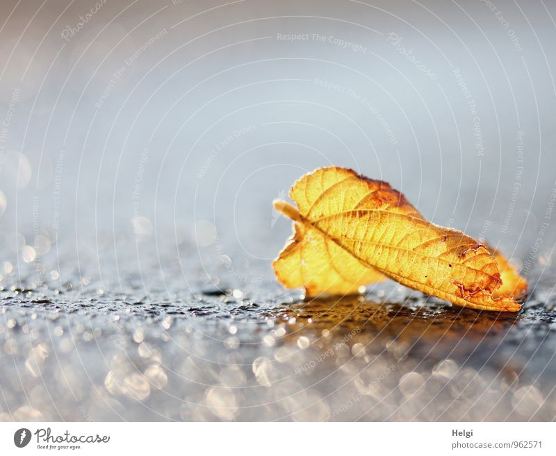 Nature Plant Beautiful Leaf Calm Environment Yellow Life Street Autumn Natural Gray Exceptional Brown Moody Lie