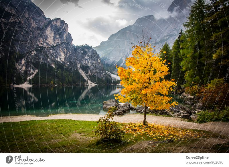 uniqueness Nature Elements Authentic Autumnal Autumn leaves Autumnal colours Lake Lakeside Mountain lake reflection Clouds Yellow Tree Pragser Wildsee Lake