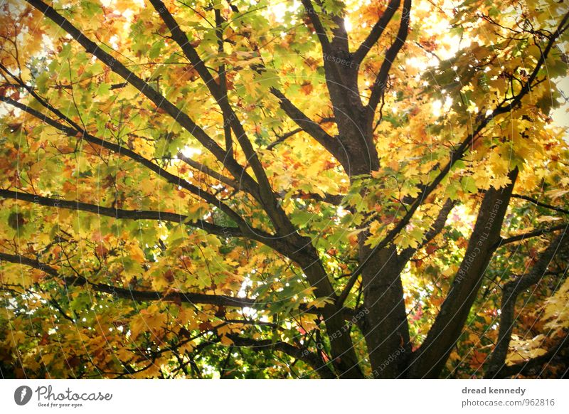 Autumn tree 2.0 Environment Nature Landscape Plant Beautiful weather Tree Leaf Garden Park Meadow Forest Esthetic Equal Idyll Moody Environmental protection