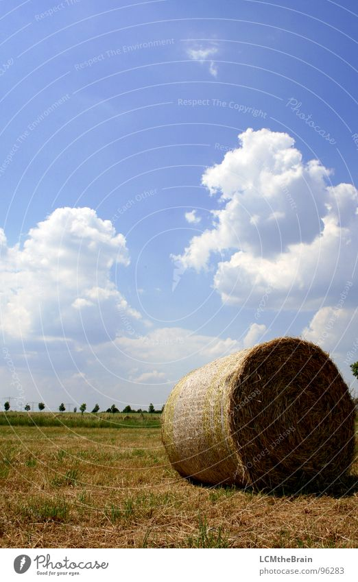 Nature Sky Sun Blue Summer Calm Clouds Yellow Meadow Grass Landscape Field Village Agriculture Harvest Straw