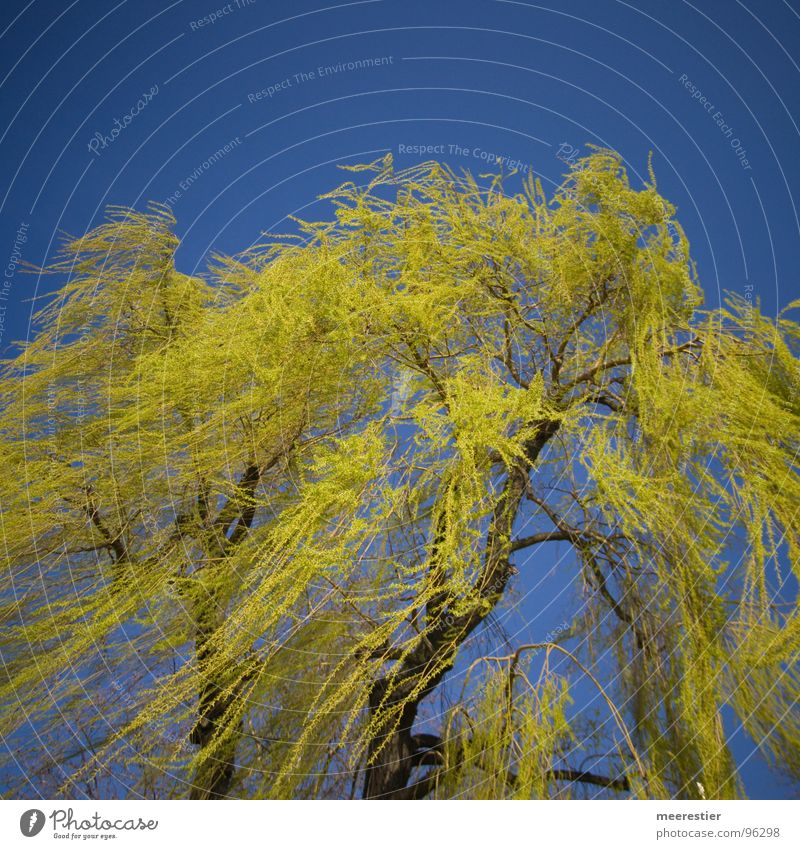 My friend the tree Green Spring Pasture Wind Perspective Contrast Blue Movement
