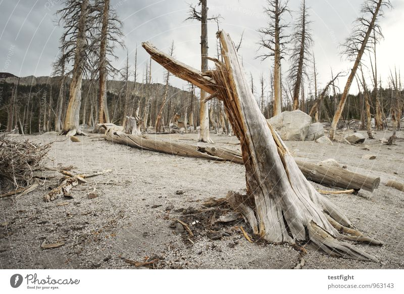 tree death Environment Nature Landscape Plant Animal Earth Sand Clouds Climate Climate change Weather Bad weather Tree Forest Threat Creepy Illness