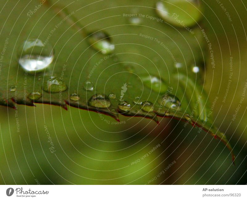 Nature Green Water Calm Rain Glittering Fresh Drops of water Electricity Wet Rope Round Clarity Near Part Concentrate