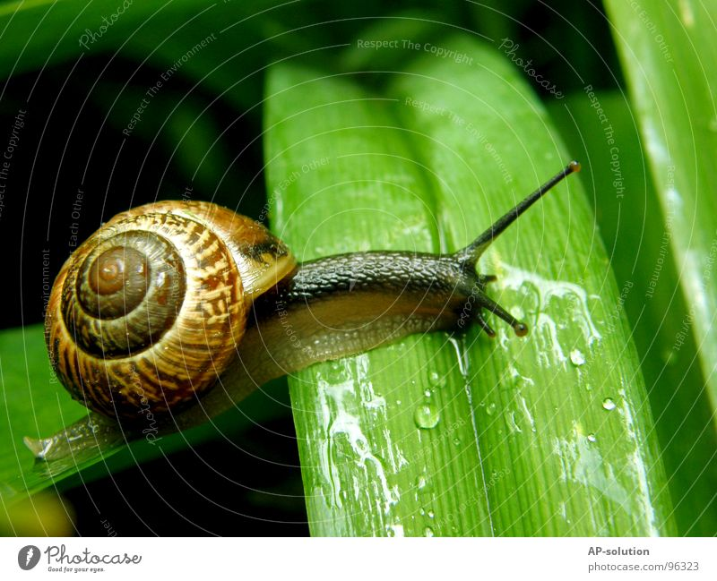Nature Green Animal Leaf House (Residential Structure) Eyes Life Grass Rain Wet Speed Drops of water Living thing Damp Spiral Snail