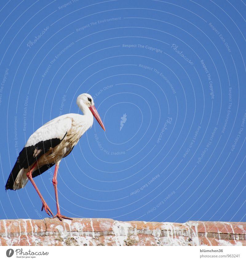 Vacation & Travel Beautiful Animal Natural Going Bird Elegant Wild animal Aviation Free Large Esthetic Trip Balance Birth Stork