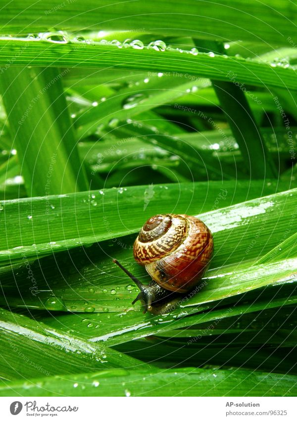 Snail *4 Air-breathing land snail Animal House (Residential Structure) Snail shell Slimy Mucus Feeler Crawl Slowly Speed Spiral Grass Withdraw Fragile Hybrid