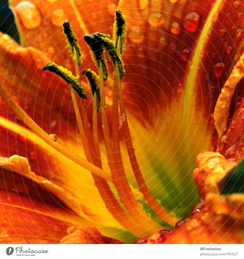 Nature Plant Beautiful Green Summer Water Flower Red Calm Yellow Blossom Spring Garden Rain Orange Glittering