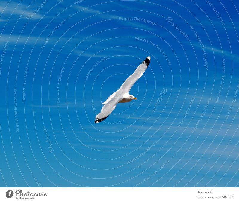 Sailing across the sky Joy Beautiful Vacation & Travel Freedom Summer Beach Ocean Island Eyes Mouth Legs Nature Animal Sand Sky Clouds Wind North Sea Bird Wing
