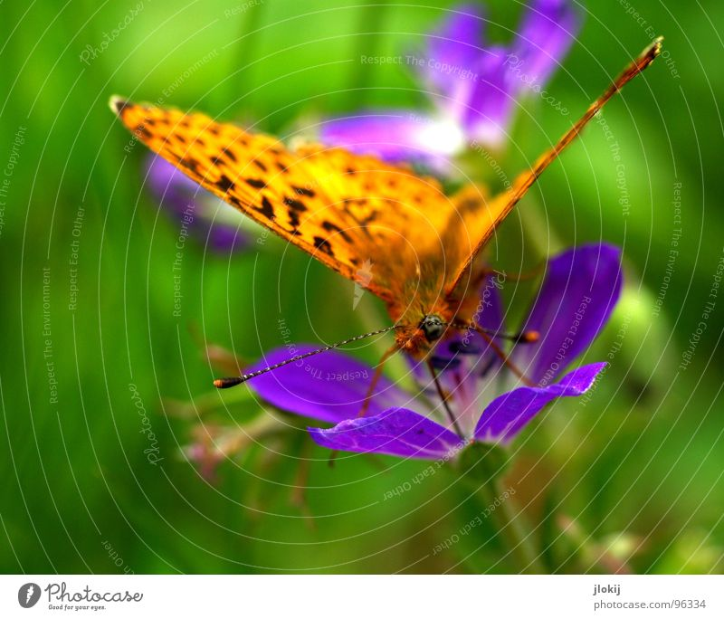 Nature Beautiful Flower Green Plant Nutrition Animal Blossom Spring Legs Orange Food Flying Violet Wing Insect
