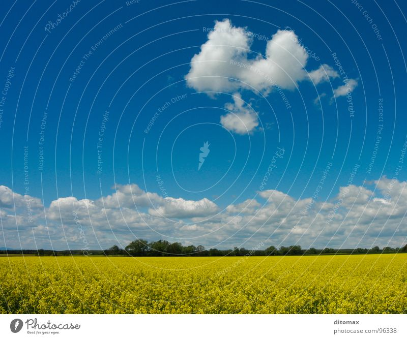 Canola cloud Yellow Nature Summer Wood flour canola field blue clouds oil environment fresh light agriculture trees