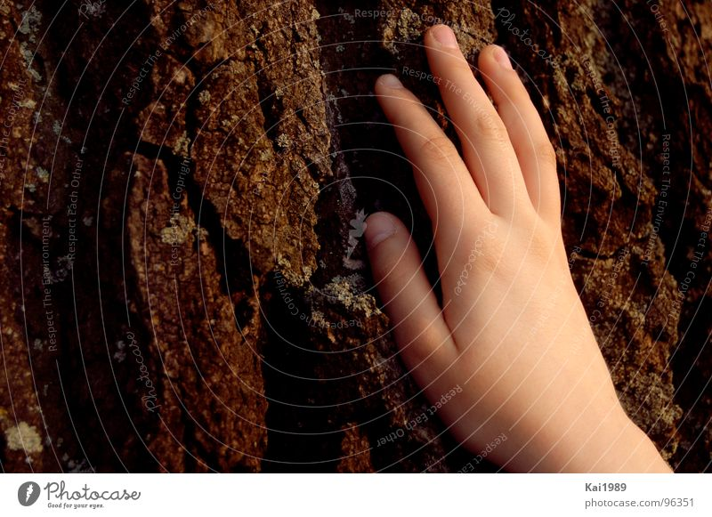 Human being Nature Hand Old Tree Plant Brown Feasts & Celebrations Skin Fingers Soft Transience Seasons Hard Tree bark Children`s hand