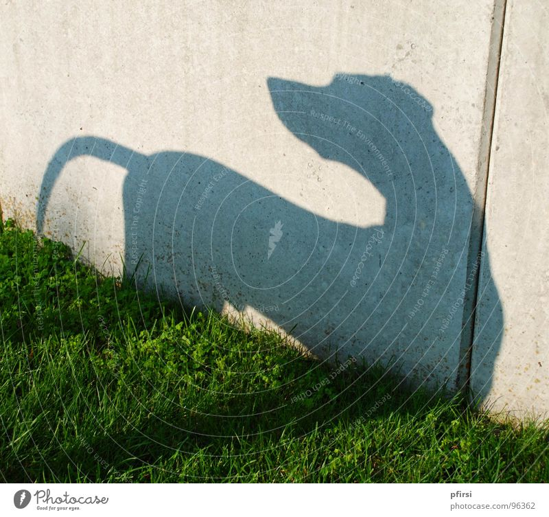 Shadow Dog - 1 Dalmatian Meadow Wall (building) Wall (barrier) Animal Pet Shadow play Light Mammal chien dalmation Self portrait sun Silhouette