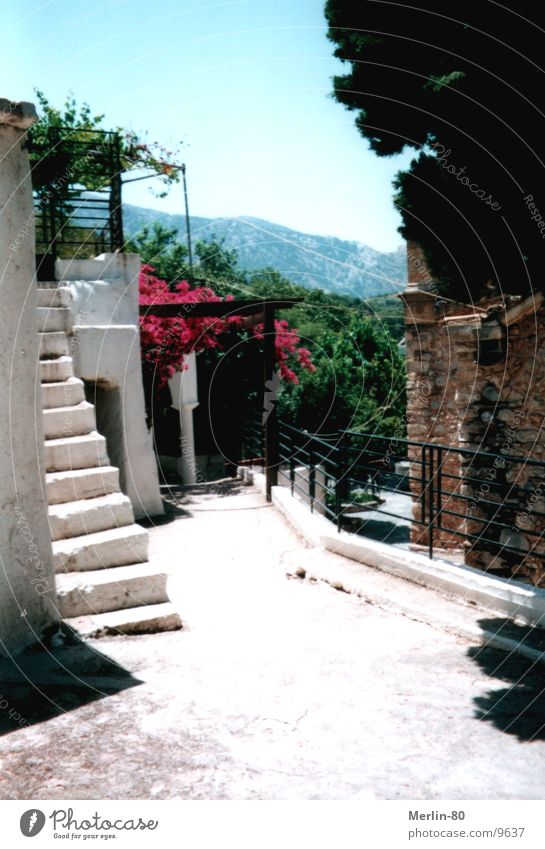 Old monastery on Crete Flower Green Europe Monastery white staircase Sun Beautiful weather