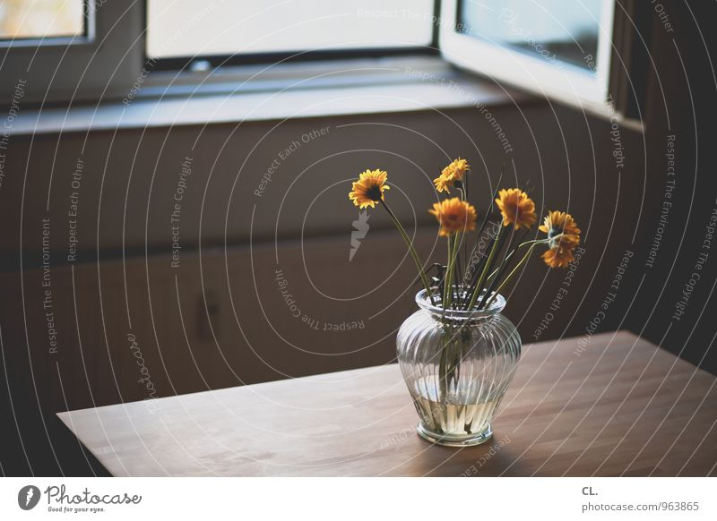 Flower Window Yellow Wall (building) Interior design Wall (barrier) Flat (apartment) Room Living or residing Decoration Open Table Furniture Heating Arrange Window board