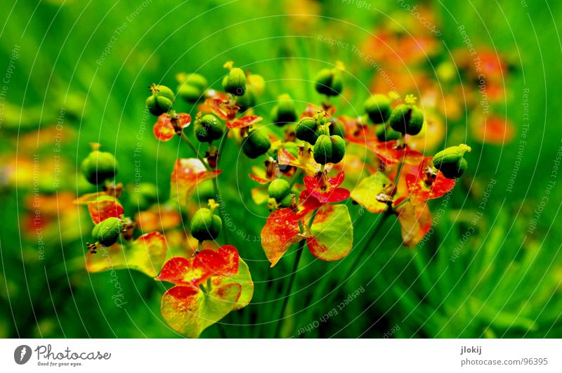 Nature Flower Green Plant Red Meadow Blossom Spring Small Earth Round Floor covering Stalk Living thing Seasons Seed
