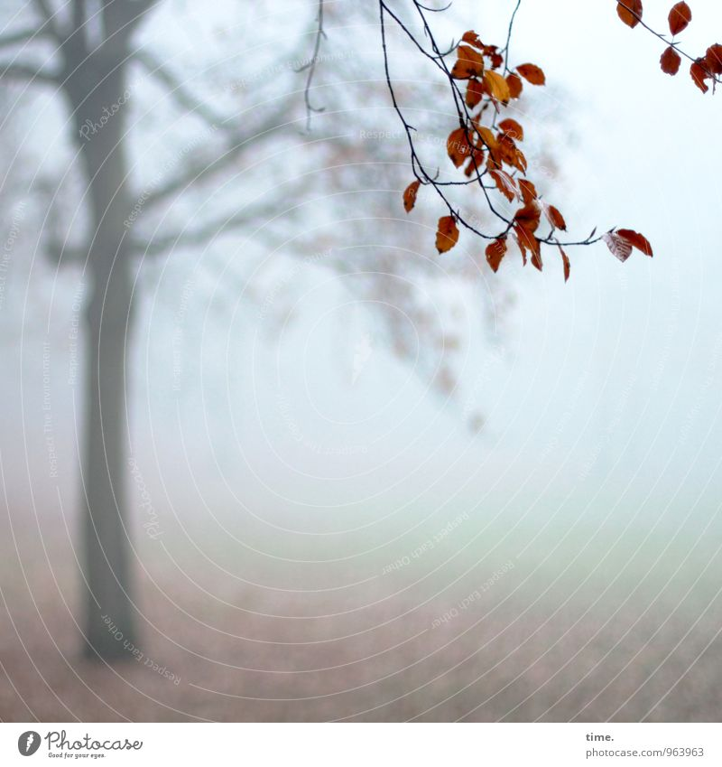 Abtanz II Environment Nature Landscape Autumn Fog Tree Leaf Branch Autumn leaves Park Hang Cold Grief Fatigue Homesickness Loneliness Exhaustion Life Moody