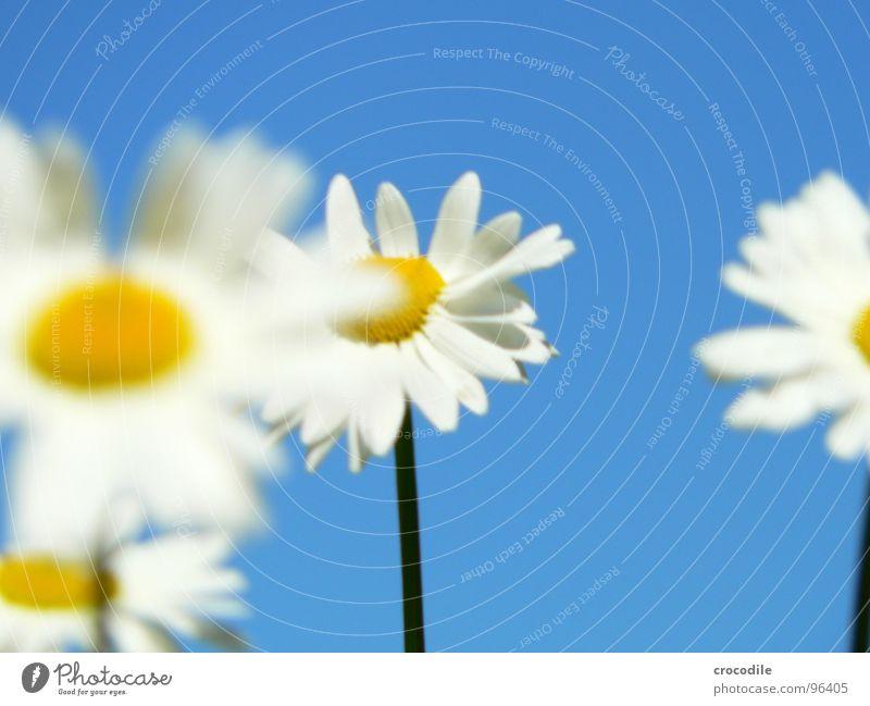 Sky Blue Plant Summer Flower Spring Stand Blossoming Stalk Spring fever