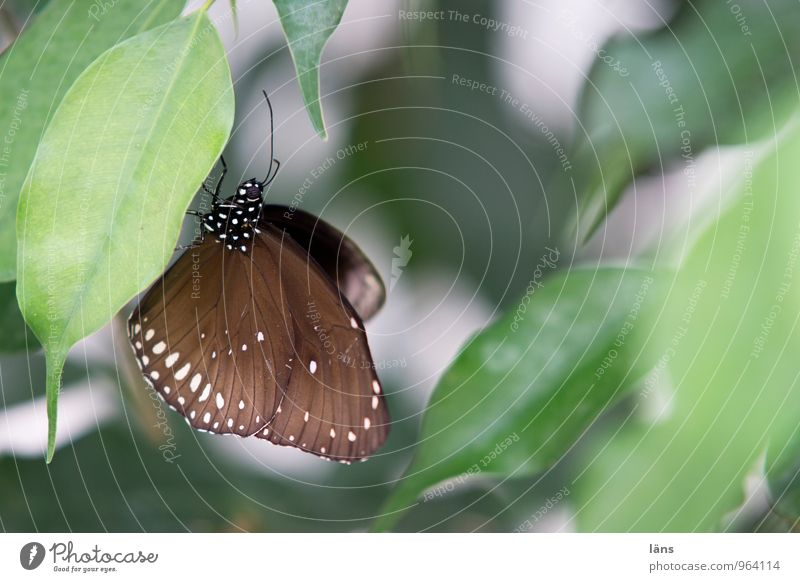 matched Animal Butterfly Wing 1 Relaxation Sit Esthetic Brown Green Colour photo Shallow depth of field