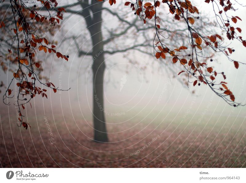 Nature Tree Loneliness Landscape Calm Environment Life Sadness Autumn Meadow Park Fog Transience Change Grief Pain