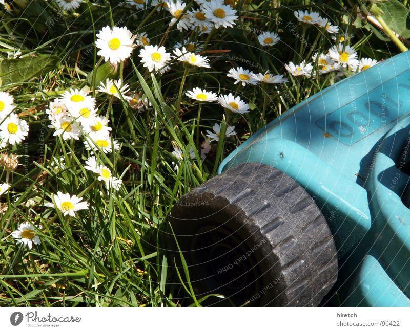 Beautiful White Sun Flower Green Yellow Meadow Spring Fresh Hope Lawn Daisy Lawnmower Mow the lawn