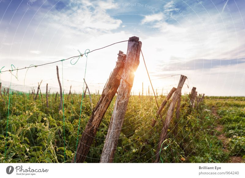 Wooden posts in the evening sun Summer Agriculture Forestry Nature Sun Sunrise Sunset Sunlight Beautiful weather Plant Field Moody Relaxation Sustainability