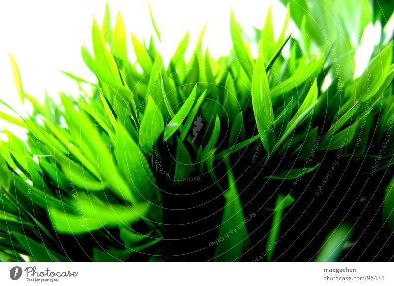 Nature Green Plant Summer Joy Grass Spring Freedom Healthy Fresh Lawn Refreshment Juicy Brilliant Pleasant